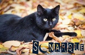 lo que significa soñar con gato negro