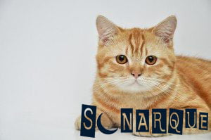 significado de soñar con gato amarillo