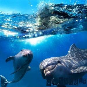 Soñar con delfines nadando