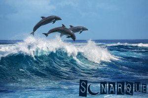 Soñar con un delfín haciendo trucos