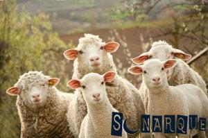 Soñar con un rebaño de ovejas