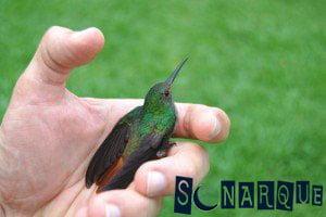 Soñando que sostienes un colibrí