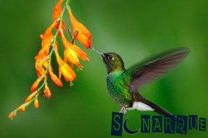 Soñando que ves un colibrí