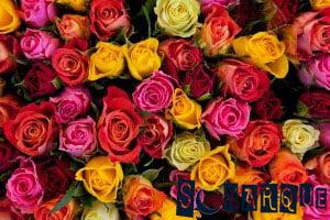 Soñando con rosas de colores