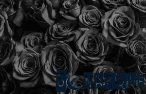 Soñando con rosas negras
