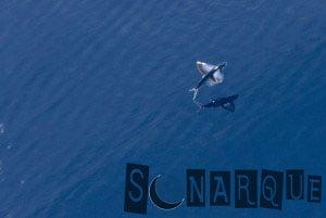 lo que significa soñar con peces voladores