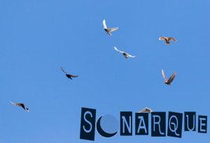Soñar con palomas voladoras