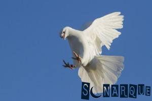 Soñando con una paloma blanca