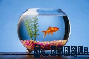 soñar con peces en el acuario significa qué
