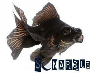 Quiero soñar con peces negros