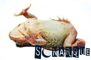 Soñé con una rana muerta