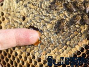 Sueña con la miel en la colmena