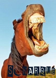 ¿Qué significa soñar con un caballo salvaje?