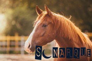 significado de sueños sobre caballos