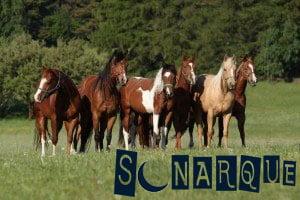 Soñé con caballos que significa