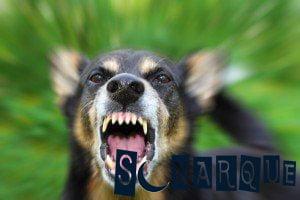 soñar con un perro enojado