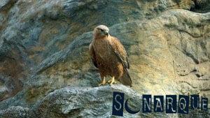 Soñando con un águila 3