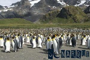 Soñando con pingüino 3