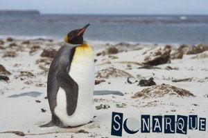 Soñando con un pingüino