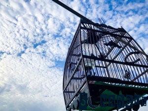 Soñando con la jaula 3