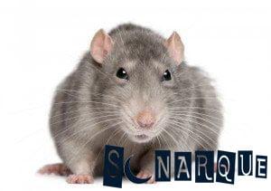 interpretación de los sueños sobre ratones grises
