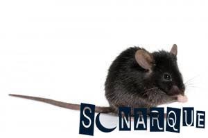 lo que sea que diga ¿Sueñas con un ratón negro?