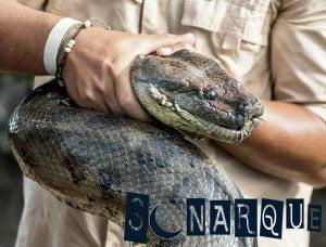significado de serpiente grande