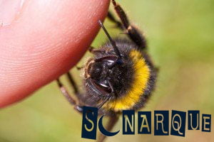 sueña con la picadura de abeja