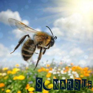 sueño de abeja voladora