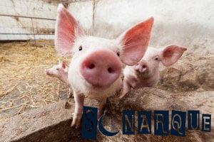 Soñar con cerdo rosa