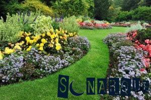 Soñar con un jardín de flores