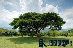 Sueño de un gran árbol