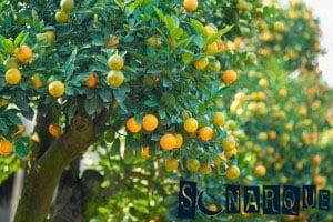 Soñar con un árbol frutal