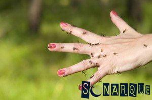 Soñar con hormigas en tu cuerpo