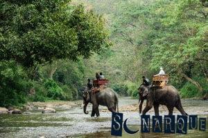 Soñando con un elefante cargando gente