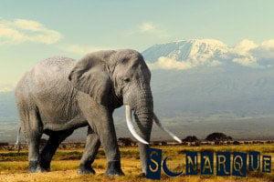 Soñando con un elefante gris