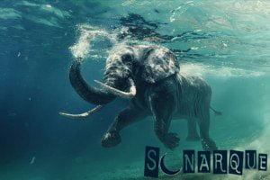 Soñar con un elefante nadando