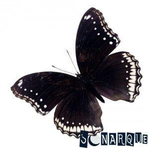 Soñando con una mariposa negra
