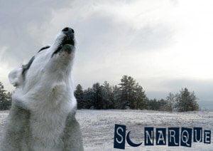 Lobo soñando aullando