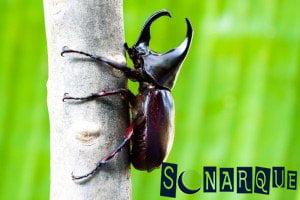 Soñando con un escarabajo negro