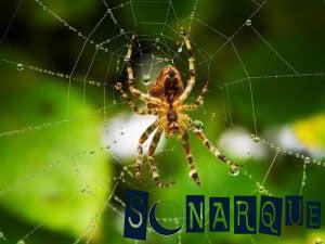 soñando con una araña