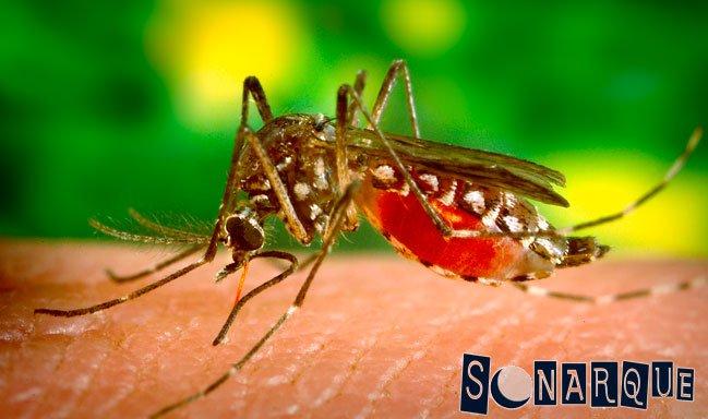Evite que los mosquitos entren en su casa