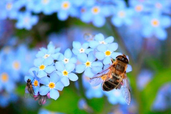 Las abejas como símbolo del sueño