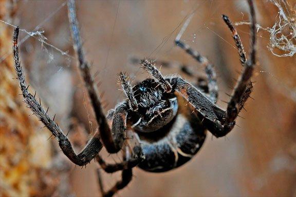 Lo que significa soñar con una gran araña