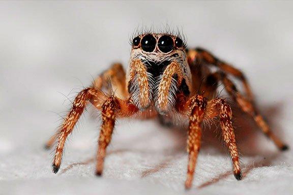Si sueñas con que una araña te mata