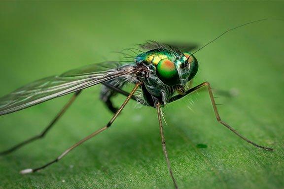 Soñando con el zumbido de las moscas