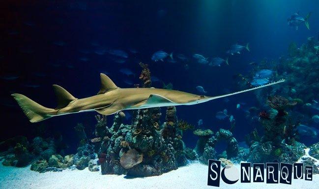 Soñando con un pez con lengua de oro