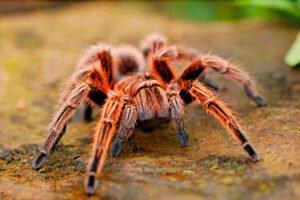 Soñar con mordedura de arañas