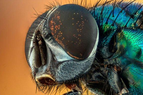 Soñar con moscas en la pared