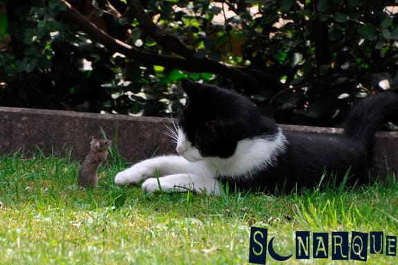 Soñar-con-un-gato-y-un-ratón